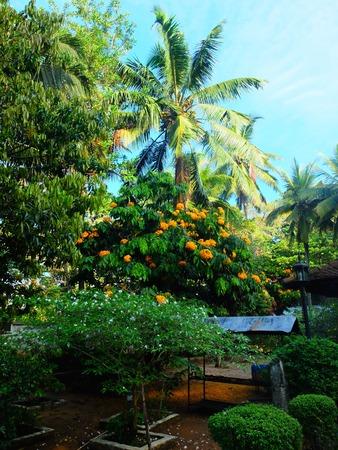 kandy: natural landscape in Kandy, Sri Lanka Stock Photo
