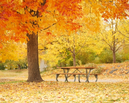Empty bench under colorful fall tree photo
