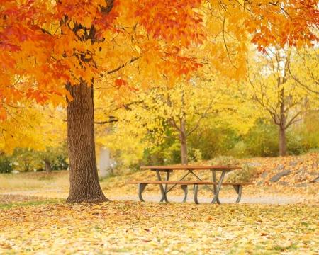 Lege bank onder kleurrijke vallen boom