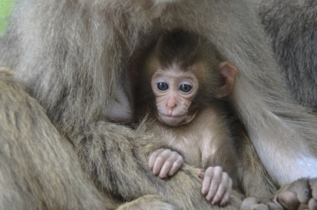 Mother and Baby Monkey photo