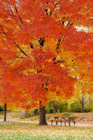 Empty bench under a fall tree photo