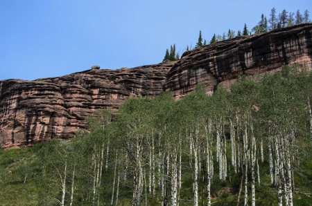Aspen Trees And Red Rock Wall photo