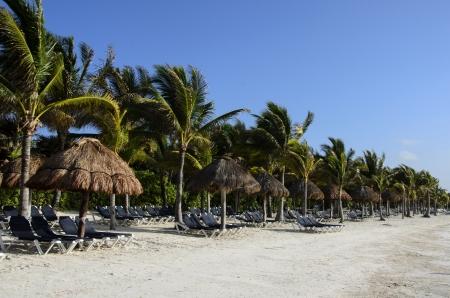 riviera maya: Playa tropical con palmeras en la Riviera Maya, M�xico