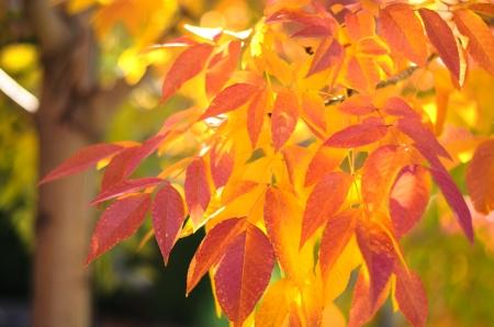 hojas de colores: Colorido hojas en oto�o  Foto de archivo