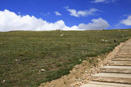 alpine tundra: Wildflower on the alpine tundra during the summer in Rocky Mountain National Park