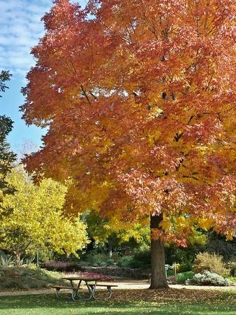 가을 나무 아래 빈 벤치