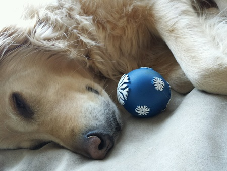 Dog sleeping with a toy ball Banco de Imagens