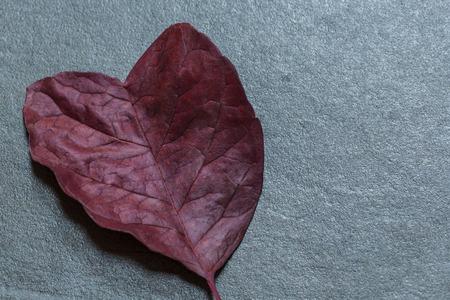 heart shaped: Heart shaped leaf on the slate background