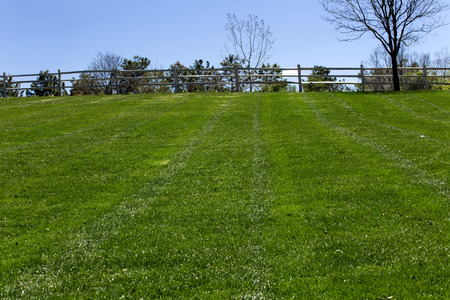 cut the grass: Freshly cut grass at the empty park in springtime Stock Photo
