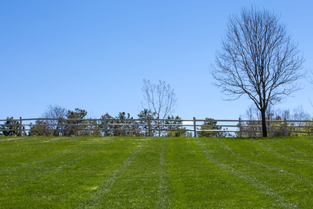 cut grass: Freshly cut grass at the empty park in springtime Stock Photo