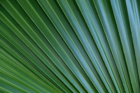 Close-up of palm leaf Stock Photo