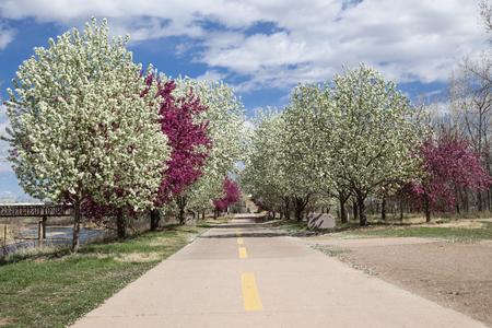 Crabapple trees along the bike path