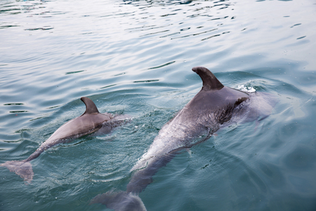 Mother and baby dolphins swimming side by side Stock Photo