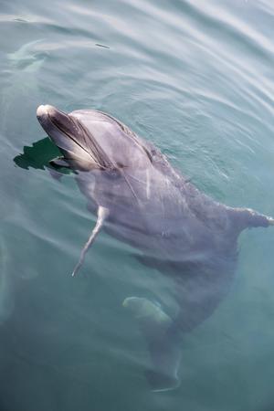 Single dolphin looking up Stock Photo - 115211260
