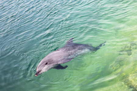 Single dolphin looking up