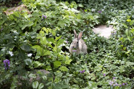 Bunny eating plant in the garden Stock Photo