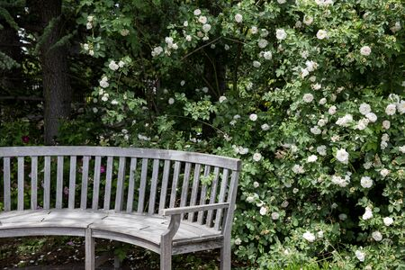 Rose Garden with wooden bench