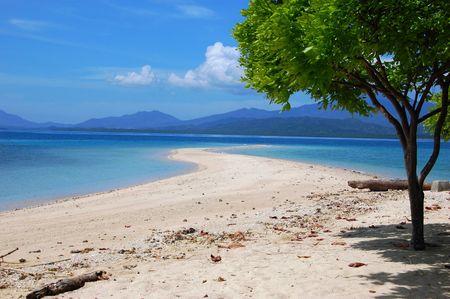 Sandbar and a tree