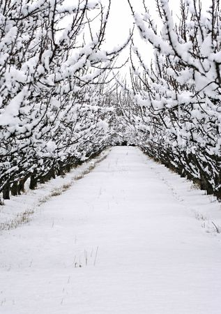 chill: Trees full of snow line a walkway on a cold winter day Stock Photo