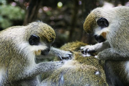 Community cleanup for a group of monkeys