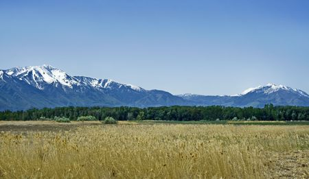 capped: Snow capped mountains and golden fields. A beautiful landscape with different lines of color