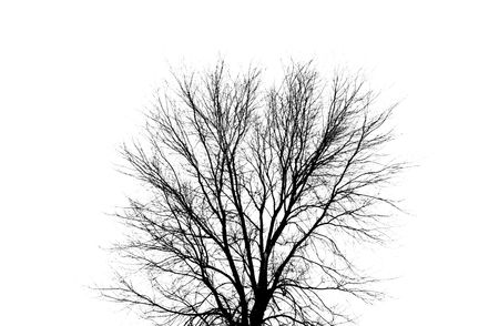 The silhouette of a dark, leafless tree in winter. This is a simple, clean background Stock Photo