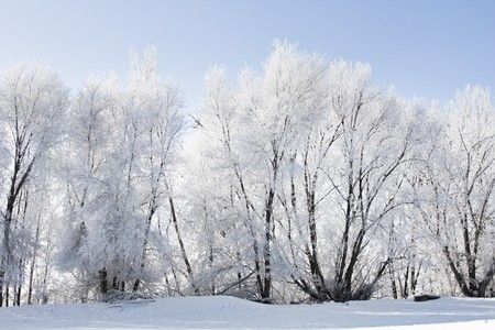 wintery: Frost and snow cover a wintery landscape