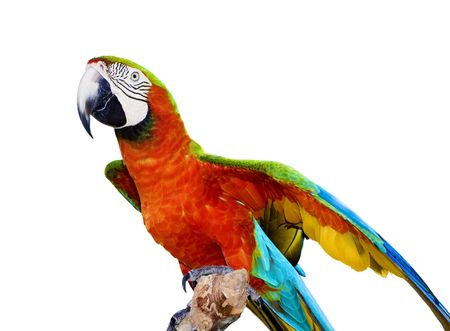 A scarlet macaw parrot isolated on a white background. Mother Natures makes Vivid Colors Stock Photo - 4703207