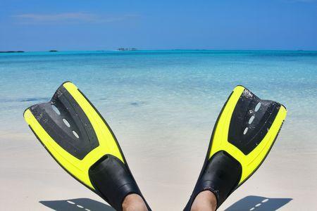 sandal tree: Desde el punto de vista de un buzo de buceo o snorkeler mirando en las aguas azules turquesas del Caribe en las Bahamas