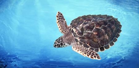 Green Sea Turtle Stock Photo - 9775116