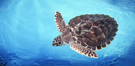 Green Sea Turtle Stockfoto