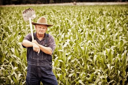 農家: ヴィンテージ古い農家、トウモロコシ畑で