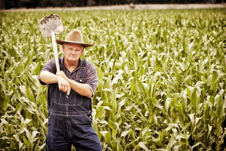 corn stalk: Vintage Old Farmer in the Corn Fields Stock Photo