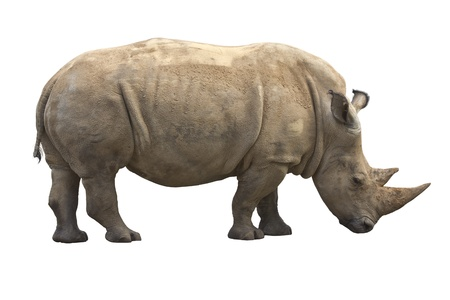 African Rhinoceros isolated on a white background
