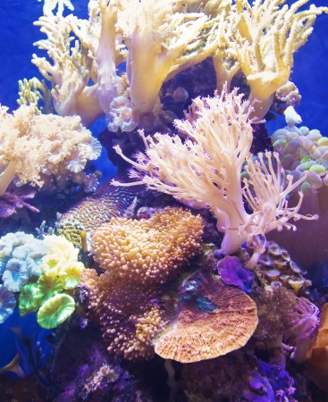 Healthy and Vibrant Coral Reef Stock Photo - 19313794