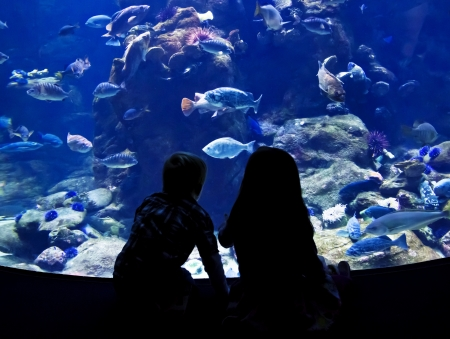 aquarium tank: Children watching fish in a large Aquarium Stock Photo