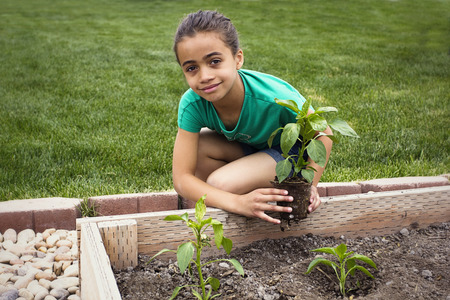vegetable plants: African American Girl Planting a new Plant Stock Photo