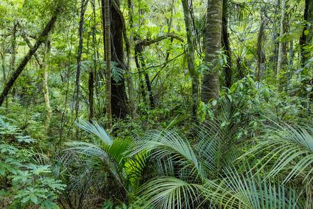 Lush Green Tropical Jungle Banco de Imagens