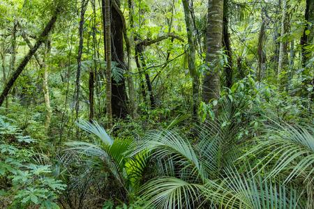 Lush Green Tropical Jungle Archivio Fotografico