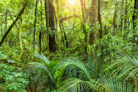 Lush Green Tropical Jungle background with the warm sun shining through