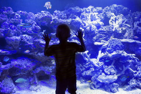 Child watching reef fish in a large Aquarium Foto de archivo
