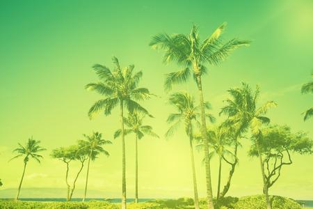 colorized: Colorized Palm Tree beach scene