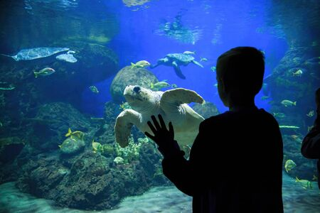 Silhouette of a young boy looking at colorful tropical reef fish and sea turtles in a large Aquarium
