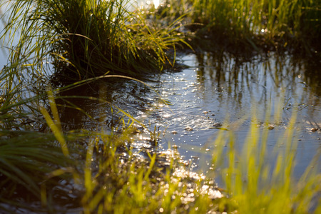 rivulet: Small water stream in a meadow in the morning light