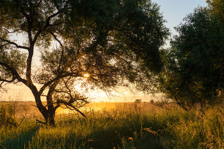 early summer: Beautiful early sunny summer morning landscape Stock Photo
