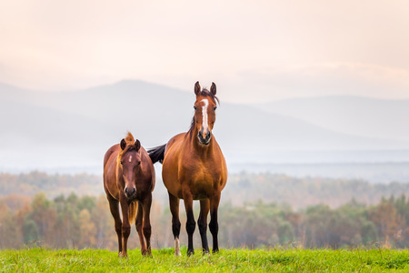 Mare and foal in a meadow in autumn Stock Photo