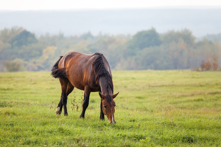 Horse grazing in a meadow in autumn Stock Photo
