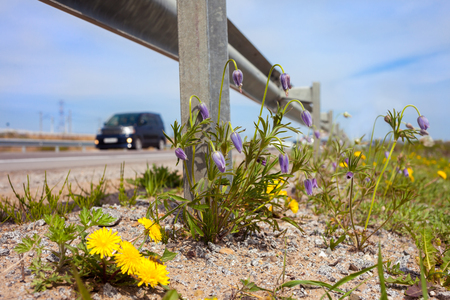 Spring flowers at roadside under guardrail