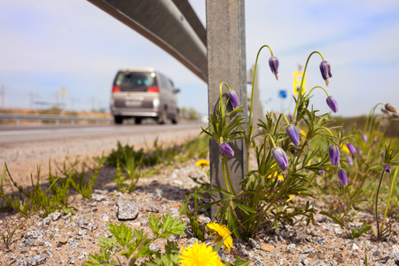 Spring flowers at roadside under guardrail