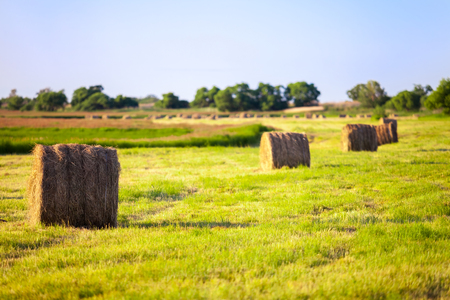 procure: Hay stacks in the field in evening Stock Photo